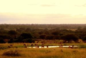 Sunrise Game Drive Kruger Park